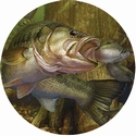"2"" FISHING Photo Mylar"